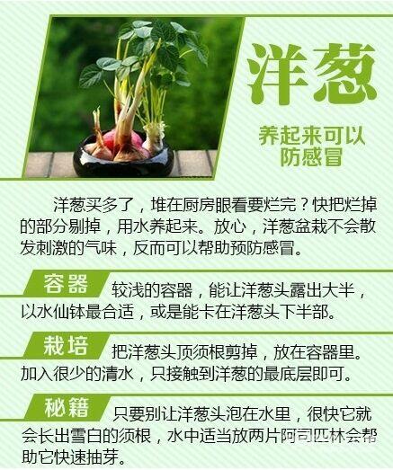 有意思的小创意:剩菜变清新盆栽