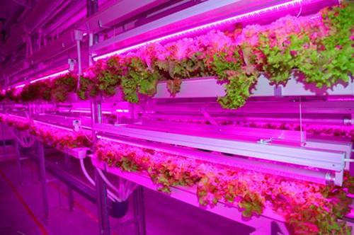 LED照明或成就农场的未来
