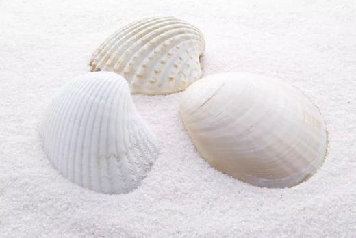 环保壁材市场容量巨大,贝壳粉涂料前景大好!