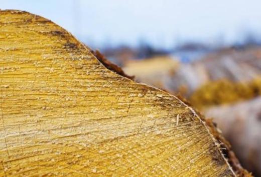 气味也是情感连接点,关于不同木材的气味你理解多少?
