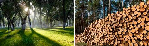 """每铺过的萨米特木纹瓷砖,都是植过的""""树"""""""