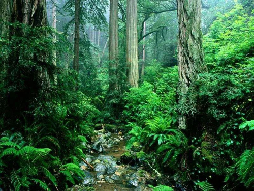 莫干山绝美生态板家装 如春色般动人心弦!
